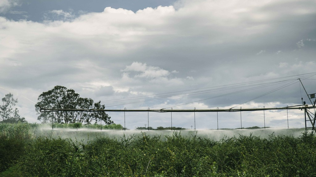 watering nutrient-rich crops on the NUTRILITE Ubajara